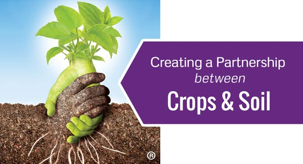 Creating a Partnership between Crops & Soil