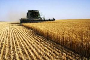 harvesting-crops