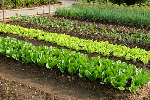 Vegetable Garden Bed Preparation Bioflora
